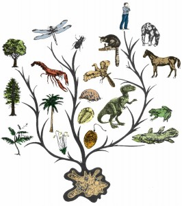 Эволюционное древо жизни